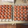 大寒の卵は本当に美味しいのか?